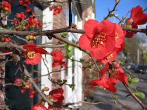 Photo: Flowers on the street in Haarlem