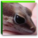 Reptile Navi2 icon