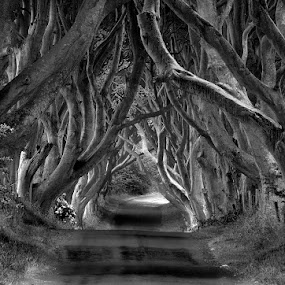 The Dark Hedges by Grzegorz Gluchy - Travel Locations Landmarks ( ireland, tree, trees, road )