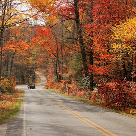 Carolina Colors by Avishek Bhattacharya - Transportation Roads ( fall leaves, fall colors, pisgah, blueridge, fall foliage )