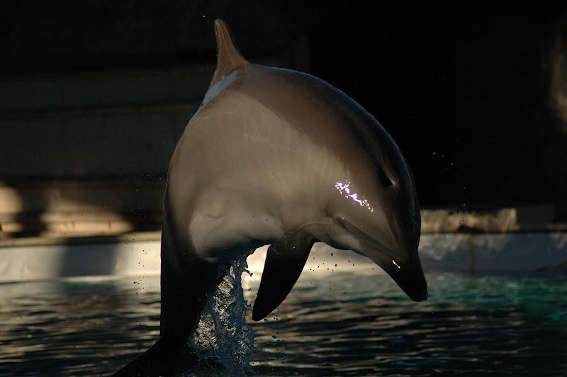Delfino di paolo_battilani