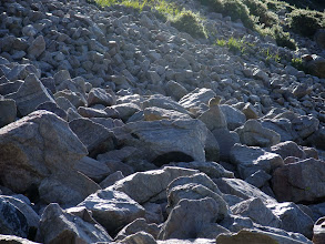 Photo: Pika in the talus