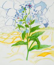"Photo: Borage Drawing, pencil and acrylic on mylar, 36"" x  30"", 2012"