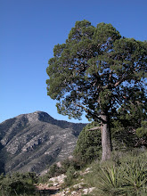 """Photo: The high point on the Tejas Trail, before crossing the divide and entering """"The Bowl""""..."""