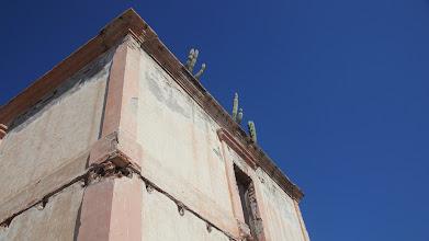 Photo: Wild Pitayas stand above
