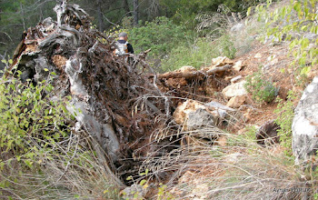 Photo: Çile - Ahmetbeyli arası. EFES-MİMAS (İYON) YOLU 4. Etabı - ALTARNATİF ROTA - 29.11.2015  (ÇİLE-AHMETBEYLİ-CLAROS Arası)