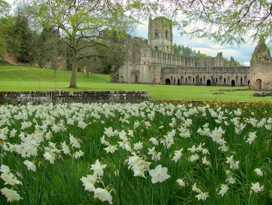 Primavera a Fountain Abbey   di silviola
