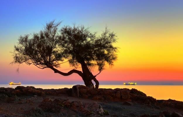L'albero al tramonto di nicola012
