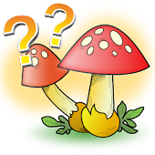 Mushrooms - quiz
