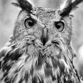 An Eye On Everything ! by Marco Bertamé - Black & White Animals ( bird, beak, owl, prey, feathers, eyes )
