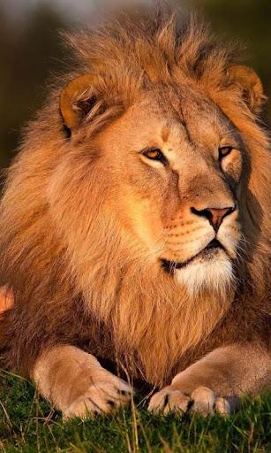 Lwp ライオン キング