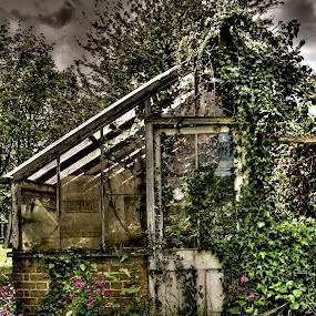 Abandoned Greenhouse by Luke Aylen - Landscapes Travel ( damaged, old, overgrown, hdr, plants, derelict, green house, weeds, flowers, garden, abandoned )