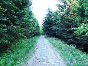 Photo: 07.Zagłębiam się w lesie. Czarny szlak na Łopień jest bardzo przyjemny, niezbyt stromy, nie rozjechany przez kłady i samochody. Mimo słonecznej niedzieli zero turystów. Oznakowanie bardzo dobre - bez trudności orientacyjnych.