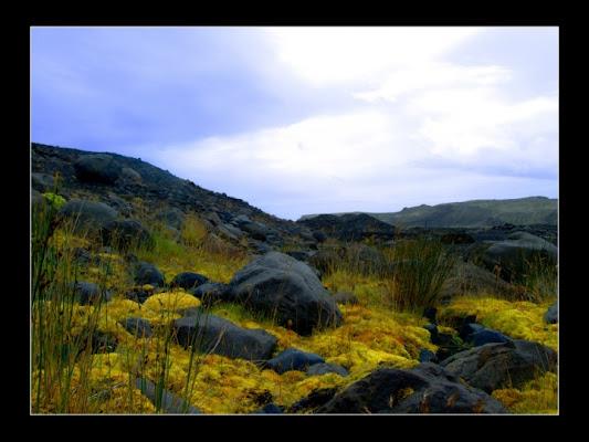 Yellow Simphony di damianop