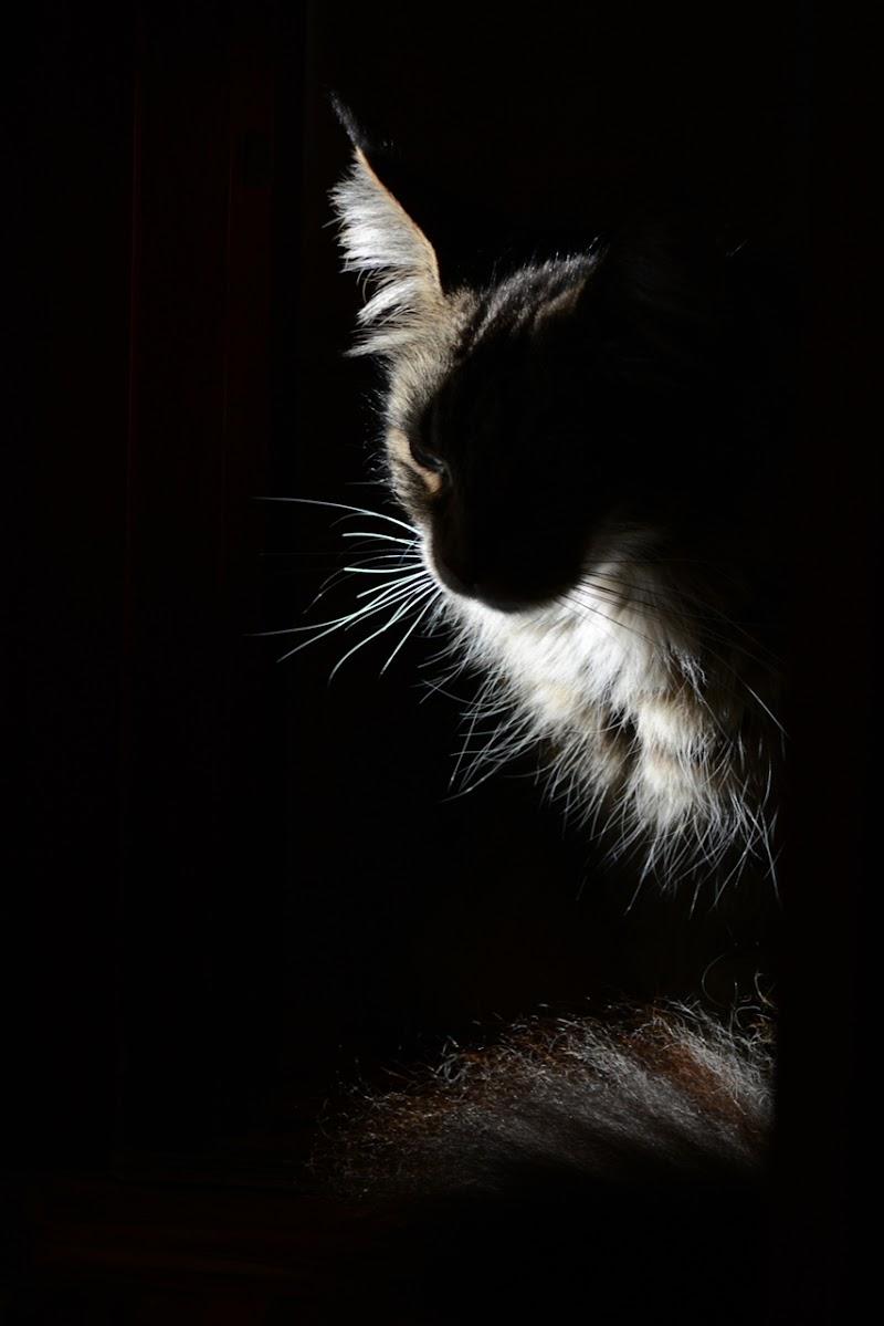 My Spirit Light di Astrid Tomada