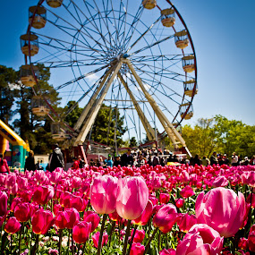 Floriade Canberra 2011 by Handoko Lukito - Nature Up Close Flowers - 2011-2013