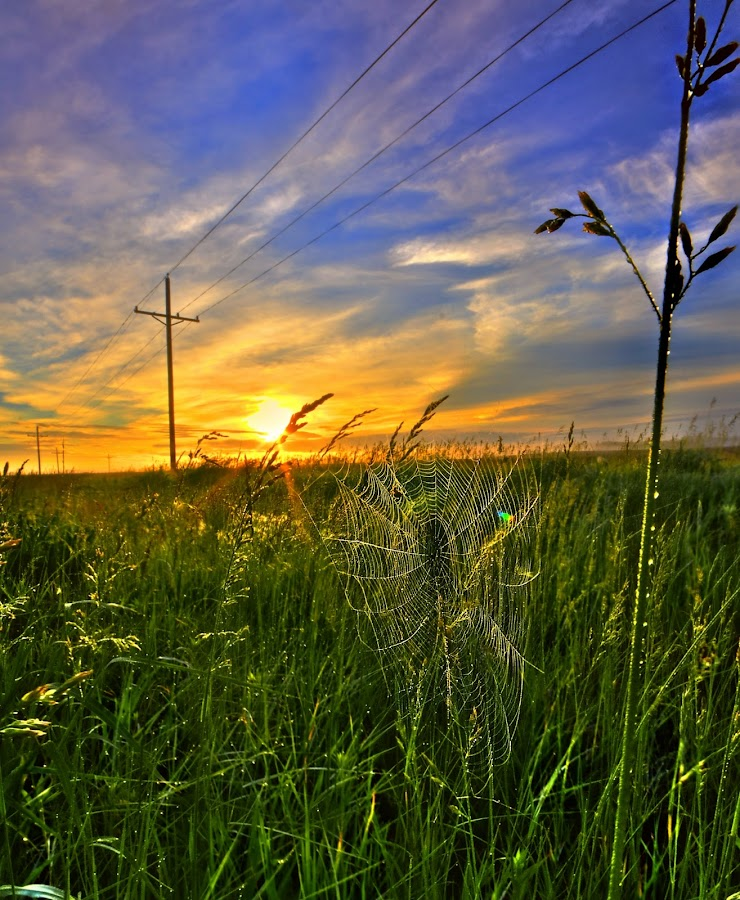 Morning Web by DE Grabenstein - Landscapes Prairies, Meadows & Fields ( web, sunrise, morning, spider web )