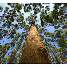 TreeTops by Rob Vandongen - Nature Up Close Trees & Bushes (  )