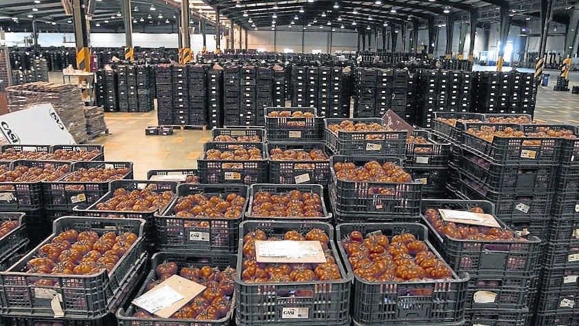 El tomate, con 580.000 toneladas comercializadas y casi 400 millones de euros, mantiene el liderazgo
