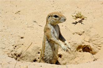 Photo: Ground Squirrel