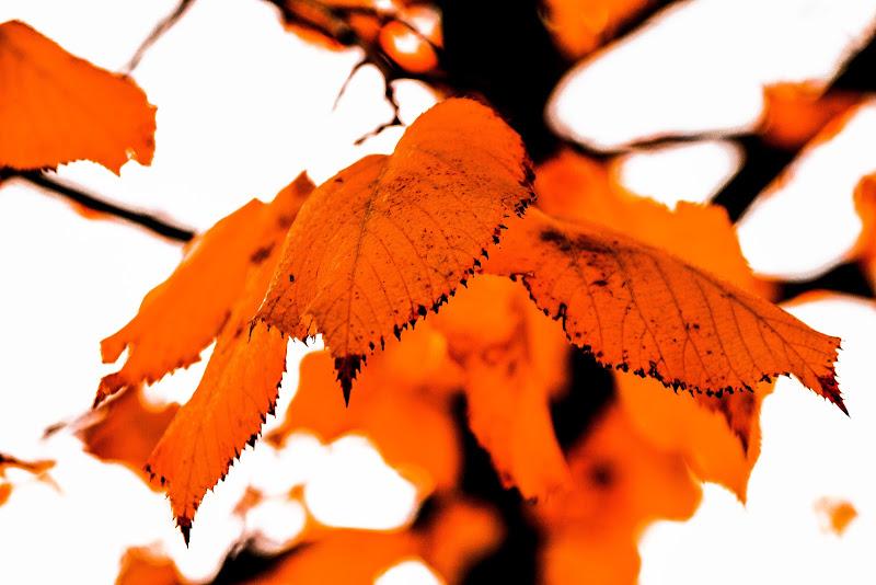 Foglie di un autunno arancione.. di Erre-Gi