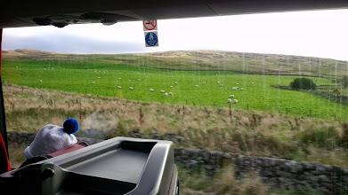 Photo: Овечки на шотландских полях...