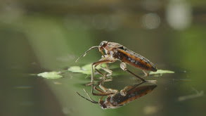 Aliens in the Pond thumbnail
