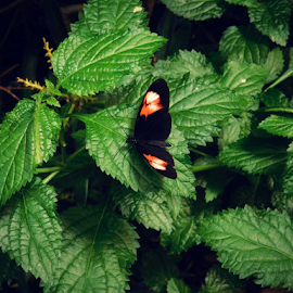 Butterfly Pause by Holly Romine - Novices Only Flowers & Plants ( butterfly, nature, foliage, insects, flowers )