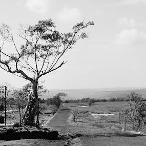 by Akshay Padhye - Nature Up Close Trees & Bushes