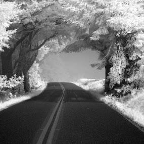 West Ridgecrest, Mt. Tamalpais by Terry Scussel - Landscapes Mountains & Hills ( pwc81: black & white landscapes, black and white, b and w, landscape, b&w, monotone, mono-tone )