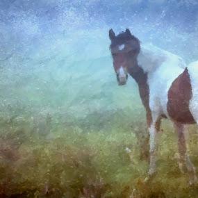 Horse face on by Marissa Enslin - Digital Art Animals (  )