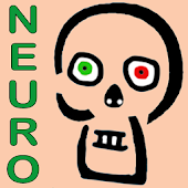 Skeletto-Neuro Anatomie