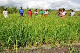 Photo: Farmer visit to SRI plot in Mlimba village, Mlimba, Morogoro, TZ, village [Photo by Erika Styger, 2012].