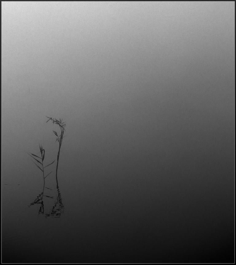 Canne nel lago di pablo