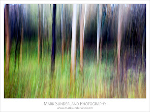 Photo: Autumn Tree Trunks in Strid Wood  Here's a shot taken as an example of deliberate camera movement on our workshop in Strid Wood near Bolton Abbey at the weekend...  Canon EOS 5D MkII,EF17-40mm f/4L USM at 40mm, ISO 200, 1/5s at f8