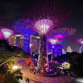 by Ken Goh - City,  Street & Park  Night