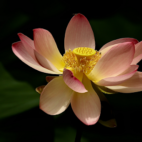 by Noel Kapica - Flowers Single Flower