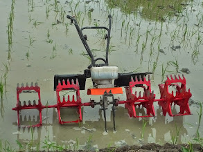 Photo: Motorized Five-Row SRI Weeder from Indonesia. [Photo courtesy of Mak Tam, September 2013]