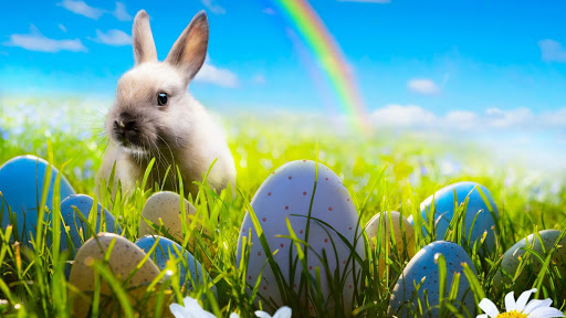 Easter Rabbit Wallpaper