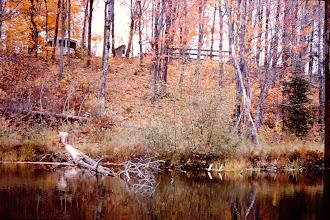 Photo: Fall colors.