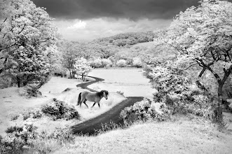 Photo: ThePony and The Mountain Trail (Clive Haynes)