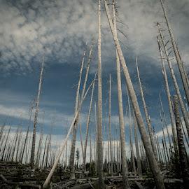 After the blaze. Waldo Lake, Oregon by Steve Banton - Landscapes Forests