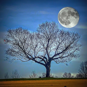 Tree and Moon by Michael Smith - Digital Art Places ( abstract, moon, tree, super moon, digital art )