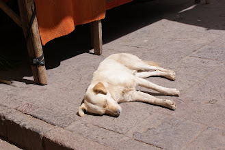Photo: One of the many pictures of dogs I've taken on one of my many trips.