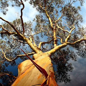 Into the Sky by Greg Van Dugteren - Nature Up Close Trees & Bushes
