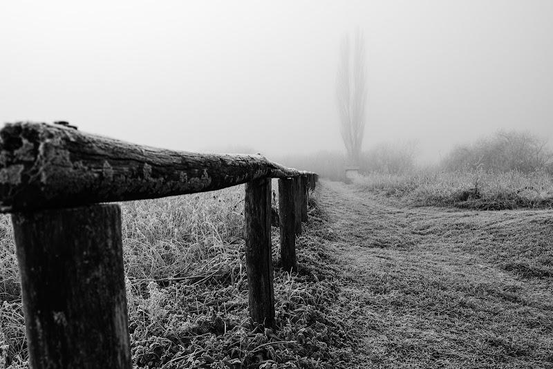 La brina della mattina di gianluca_simotti