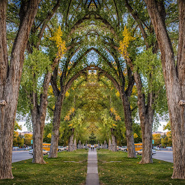 Liberty Park by Brandon Montrone - Digital Art Places ( mirrored reflections, mirror, park, tree, sunset, art, fine art, symmetry, landscape )