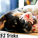 52 Dog Training Tricks icon