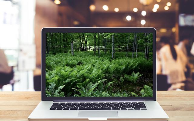 Ferns HD Wallpapers Garden Theme