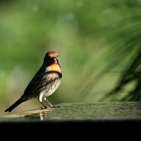 Tweet by Carmen Hahn - Animals Birds (  )